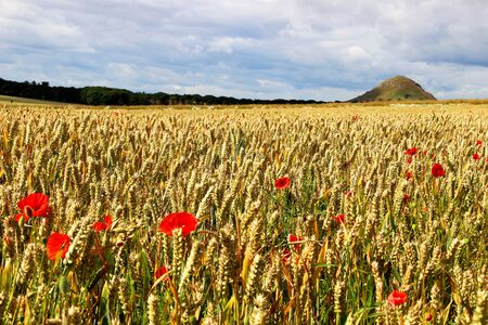 clody sky: poppies in the field Stock Photo