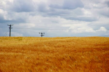 clody: clody in the field