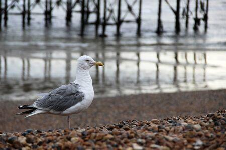 clody: seagull Stock Photo