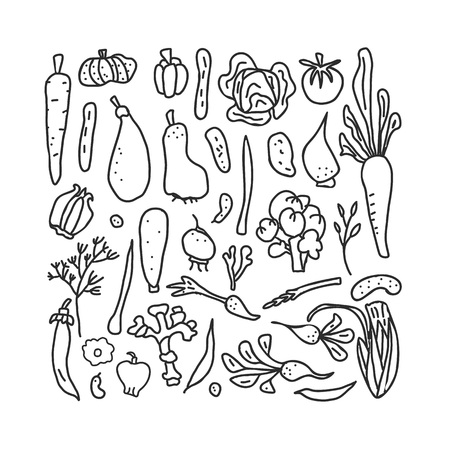 Set of vector sketch vegetables. Collection of veg in doodle style isolated on white background. Coloring pages.