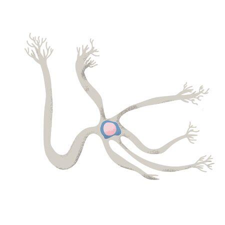 Neuron cell with long axons. Vector illustartion. Illustration