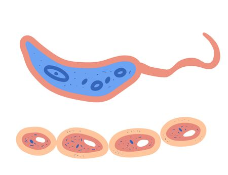 Bacterias cell. Vector illustartion in doodle style.