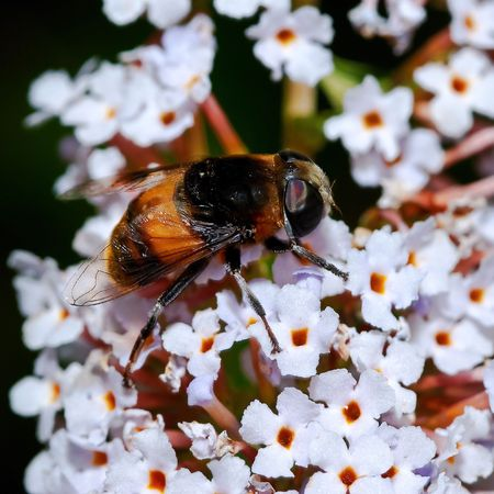 hexapod: bee