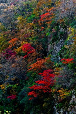 streamlet: red autumn leaves Stock Photo