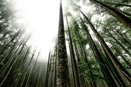 mistic: low angle view of trees in mist