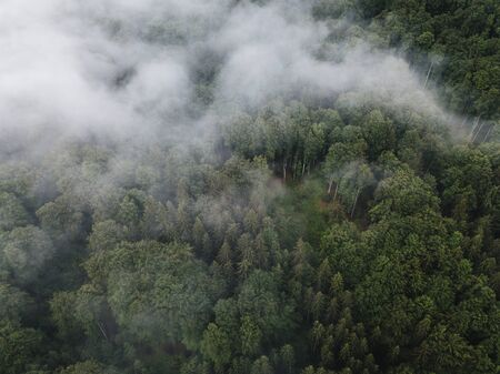 Scenic view of foggy green wilderness forest from above