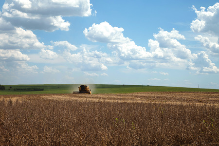 agriculture machinery: Agricultural machine harvesting soybean field. - Mato Grosso State - Brazil