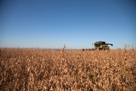 agricultural industry: Agricultural machine harvesting soybean field. - Mato Grosso State - Brazil