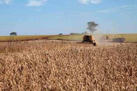 cosechadora: Cosechadoras en el campo de soja. Foto de archivo