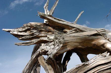 broken base of old oak tree Zdjęcie Seryjne