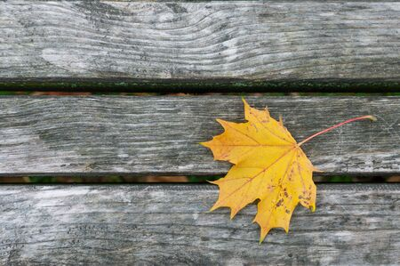 Leaf on the tree planks