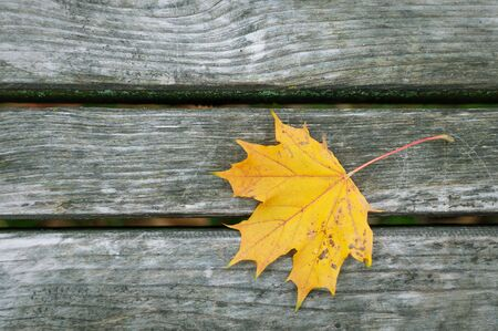 Yellow leaf on the planks Stock Photo