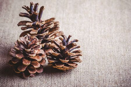 warm cloth: Christmas background, tree cones on linen fabric with empty copy space on the side.