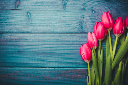 Pink tulips flowers on blue grunge wood.