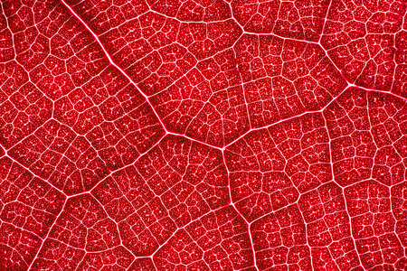 Abstract red leaf cells separated with veins. Artistic pattern design background. Standard-Bild