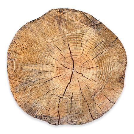 Fetta di sezione trasversale dell'albero tagliata isolata su fondo bianco.