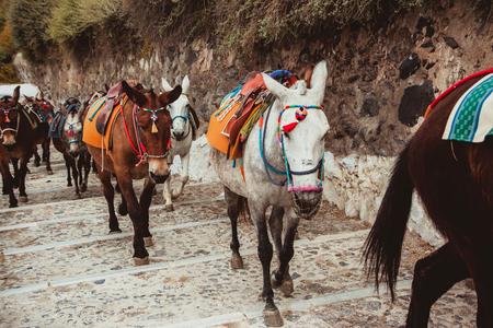 Tourist resort donkeys being used for mountain transportation. Standard-Bild - 124571782