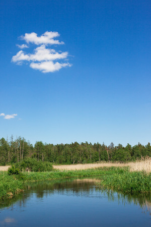 Summer forest river background. Clear, reflective pond water. Blue sky idyllic nature landscape.