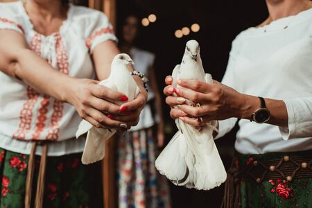 Two white pigeons in hands just before being set free in the air.