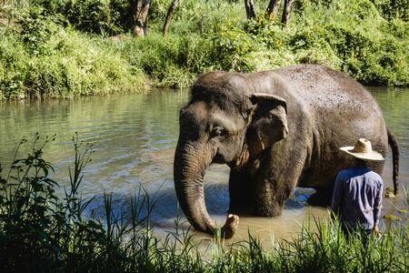 Elefante nella giungla della Tailandia. Animale selvatico in ambiente naturale. Paesaggio esotico di giornata di sole.
