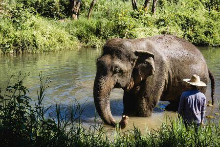 Elephant in thailand jungle. Wild animal in natural enviroment. Sunny day exotic landscape.