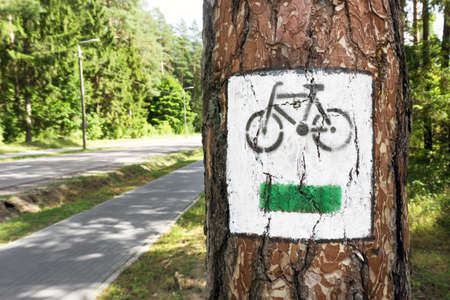 Bike trail sign on tree bark. Green cycling path. Nature activity background. White and green paint travel information in forest. Bicycle graphic symbol on a tree. 免版税图像