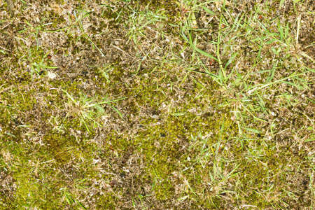 Forest ground texture. Green grass earth environment background. Tree forest plant litter pattern. Green grass top view texture. Home lawn background. Garden natural path pattern.