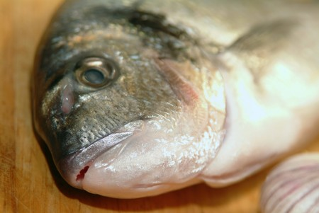 sea bream from greece at preparation before cooking photo