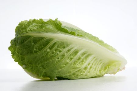 fresh organic cabbage on a white background photo