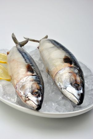two mackerel on a white plate with ice photo