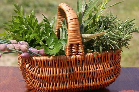 freshly picked herbs in a wicker basket Archivio Fotografico