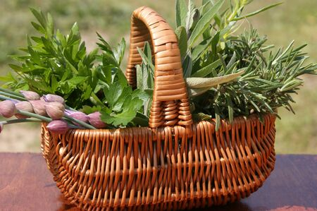freshly picked herbs in a wicker basket Standard-Bild