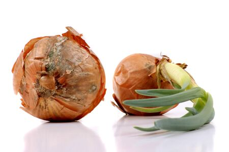imposed: two no longer edible onions on white background