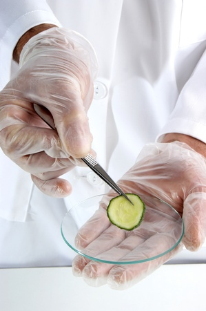 one slice of cucumber is being studied in the food laboratory Stock Photo - 9777966