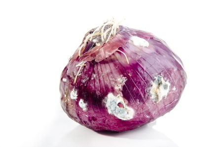 rotten: coated mold purple onion