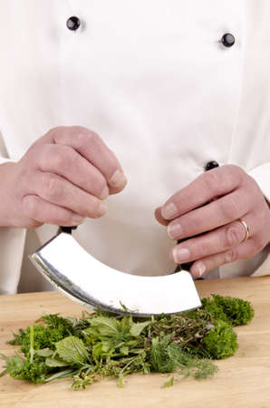 chef cuts fresh herbs with a herb chopper  Stock Photo - 14046623