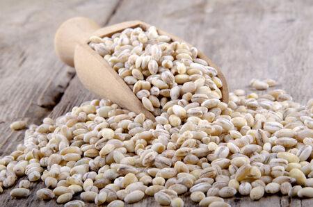pearl barley: raw pearl barley on a wooden shovel