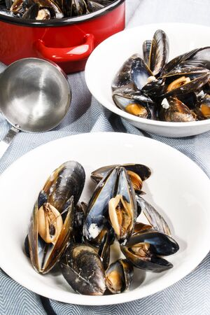 freshly prepared mussels from scotland in a white bowl Stock Photo