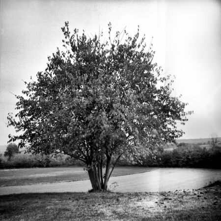 The old tree in the autumn - This black and white camera obscura photo is NOT sharp due to camera characteristic. Taken with a professional pinhole camera  Standard-Bild