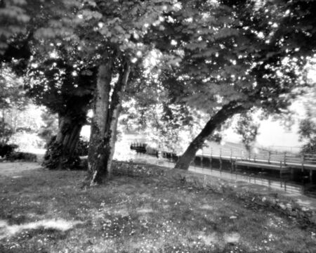 Trees during the summer - This black and white camera obscura photo is NOT sharp due to camera characteristic. Taken on film with a pinhole camera Standard-Bild