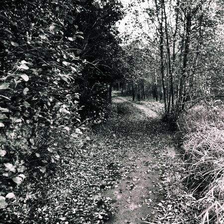 Autumn in the park - This black and white camera obscura photo is NOT sharp due to camera characteristic. Taken on film with a pinhole camera
