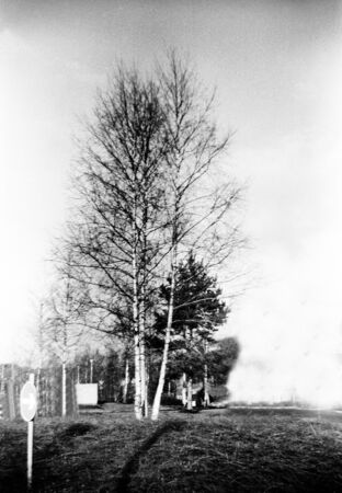 some large trees in spring without leaves, this black and white photo is NOT sharp due to camera characteristic.  Standard-Bild