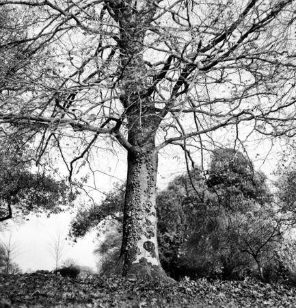 Forest in autumn with and a tree without leaves - This black and white photo is NOT sharp due to camera characteristic. Taken on black and white film Standard-Bild