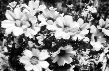 bouquet of flowers with small flower heads, this black and white photo was taken with a pinhole film camera, which corresponds to the camera characteristic
