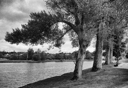 few trees stand on the bank of a river, this black and white photo was taken with a pinhole film camera, which corresponds to the camera characteristic