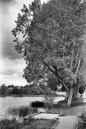the old tree and the river, this black and white photo was taken with a pinhole film camera, which corresponds to the camera characteristic