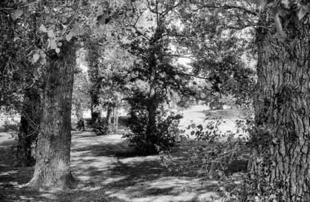 Forest path with trees on the left and right, this black and white photo was taken with a pinhole film camera, which corresponds to the camera characteristic Standard-Bild