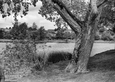 old tree beside the river erne, this black and white photo was taken with a pinhole film camera, which corresponds to the camera characteristic