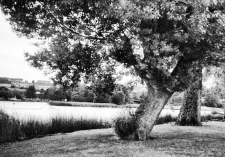 sunny day, trees on a river, this black and white photo was taken with a pinhole film camera, which corresponds to the camera characteristic Standard-Bild