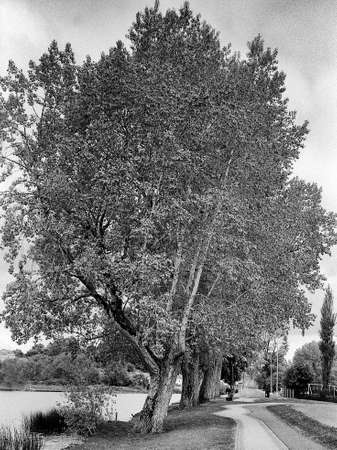 some trees, foot path and a small river, picture was taken on old fashion black and white film Standard-Bild